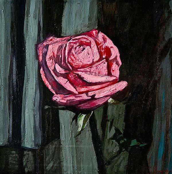 Rose et rideau